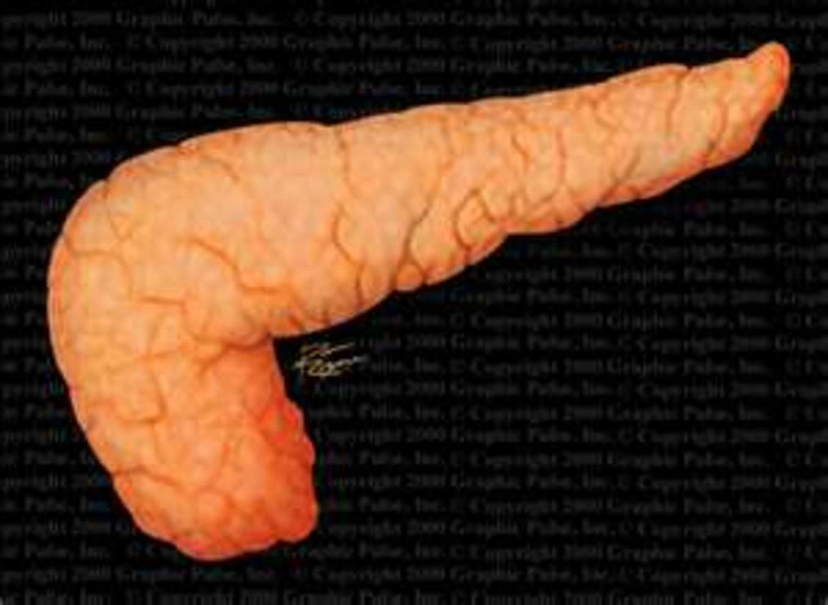 Well fixed pancreas tissue without autolysis or putrefaction.