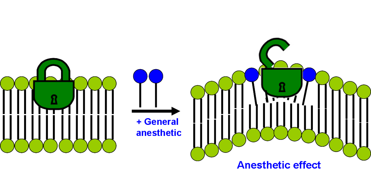 how-does-anesthesia-work