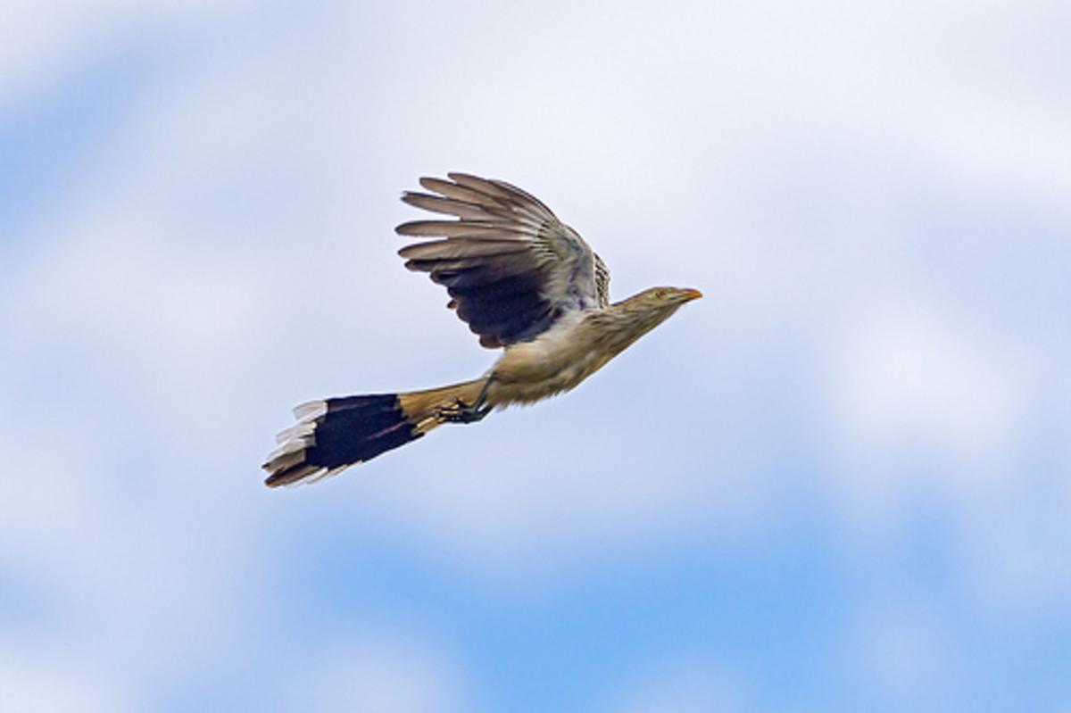 Cloud cuckoo land!