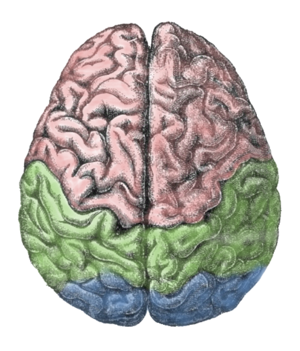 Psychiatry knows little about the brain