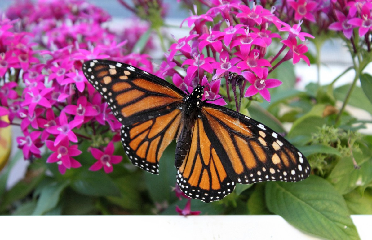 The butterfly is a symbol for transformation, life, hope and spirit. Hospices across the country hold butterfly releases to honor those who are grieving and remember their loved ones.