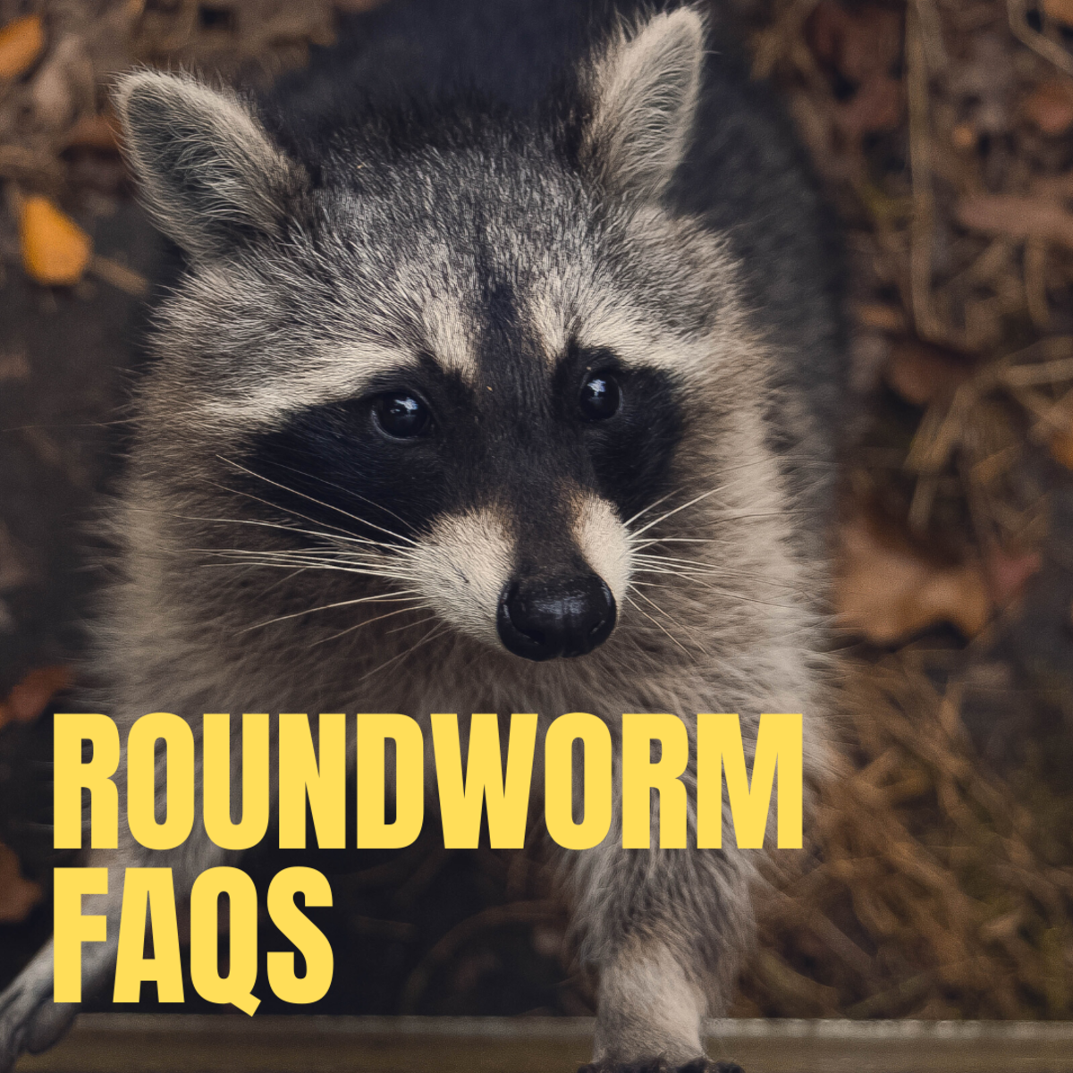 Roundworm in wildlife and pets.