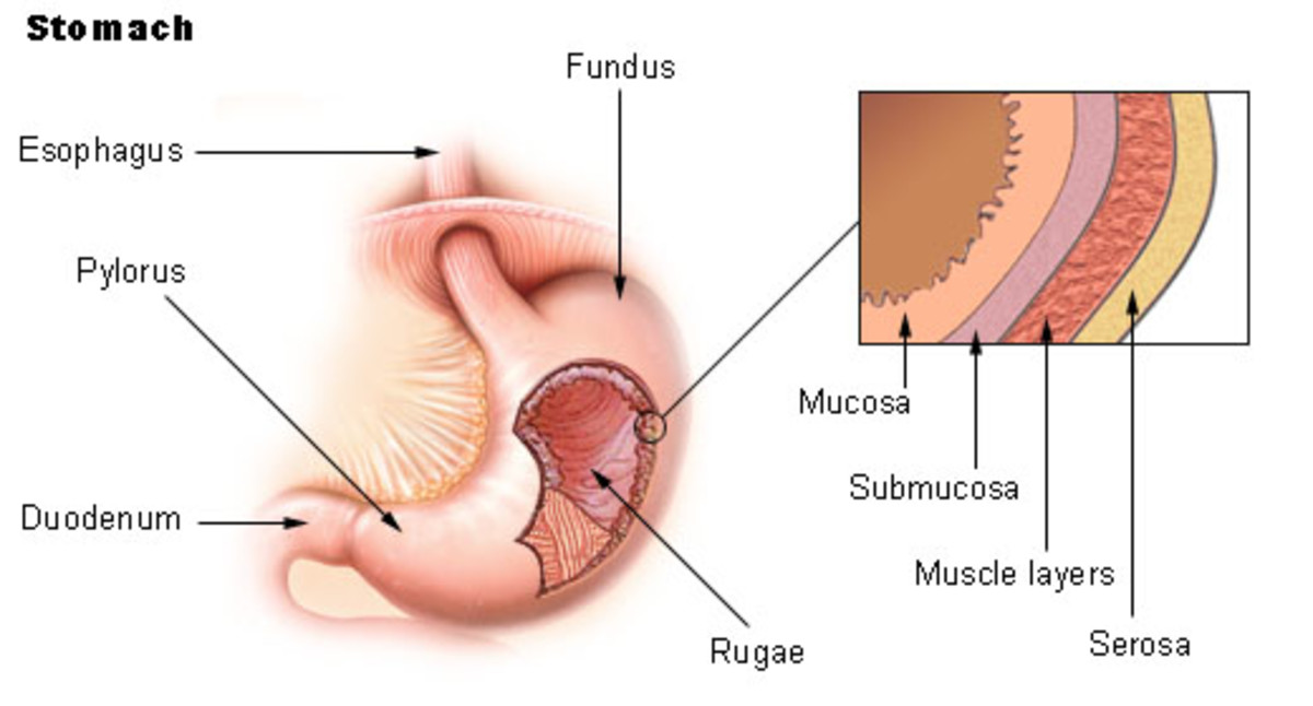 Dealing with Gastritis