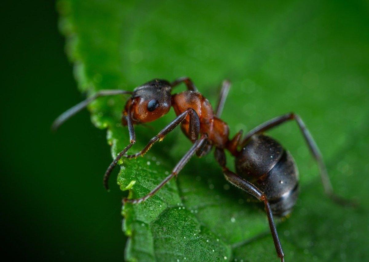 How Long Do Ants Live? | Owlcation
