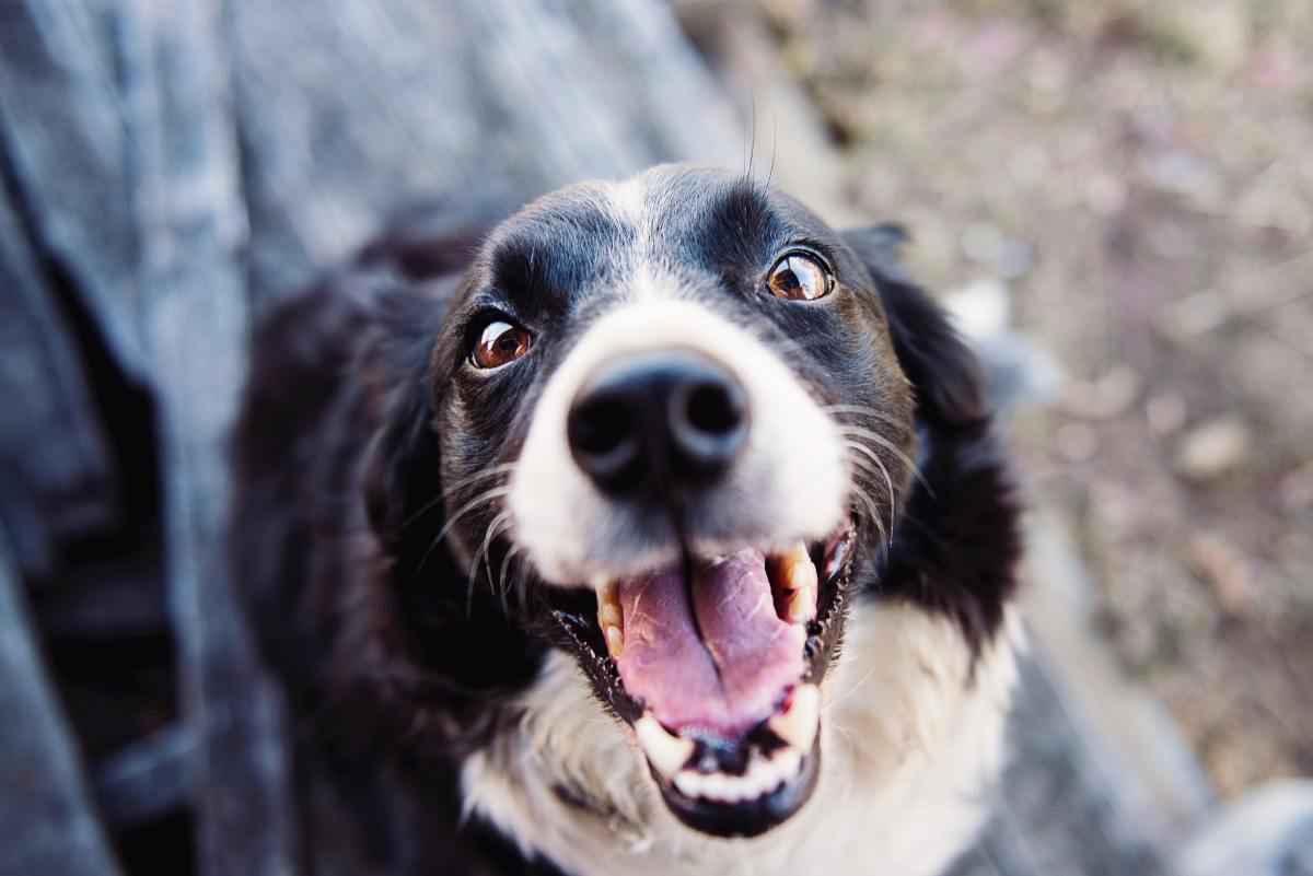 Discover what it's like to work pet sitting gigs via Rover.