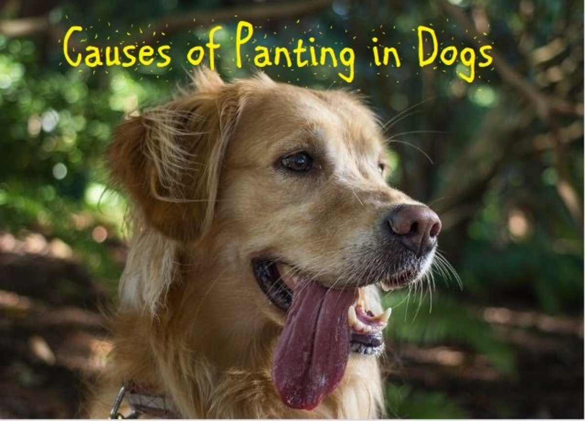 15 Causes of Panting in Dogs
