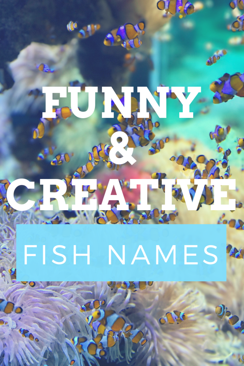 300+ Funny and Clever Fish Names