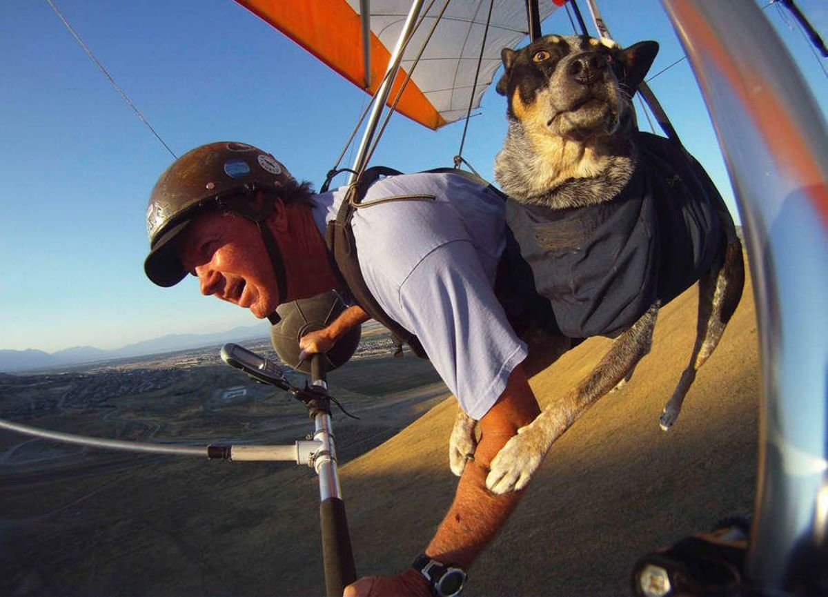 Paragliding with a canine companion