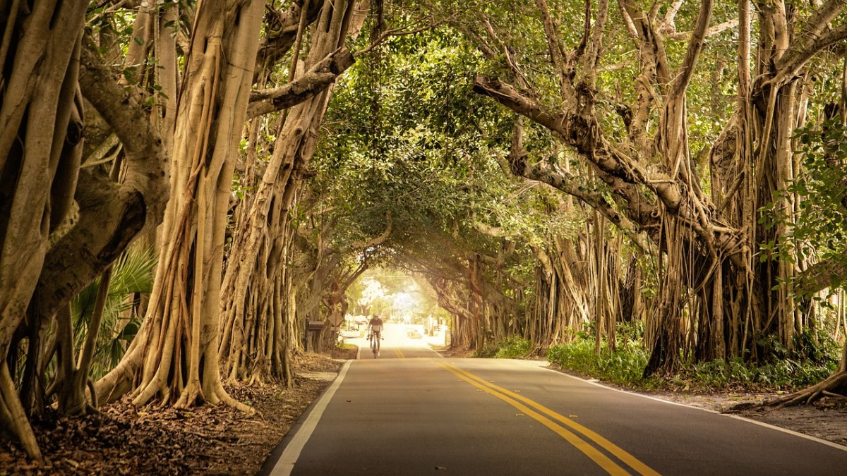 The Face of the Old Banyan Tree: A Poem
