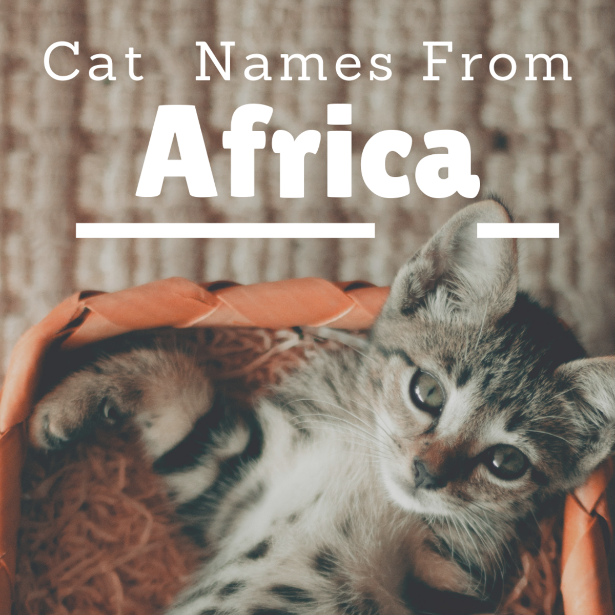 20 Awesome Cat Names From Africa