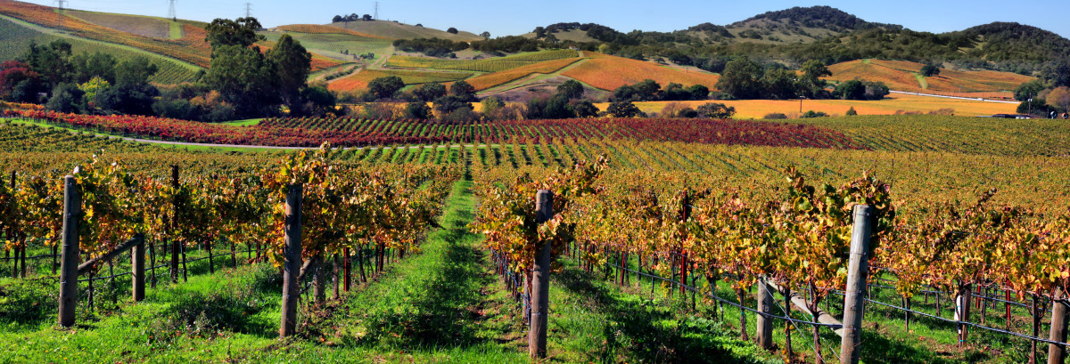 7 of the Best Napa Valley Wineries to Tour