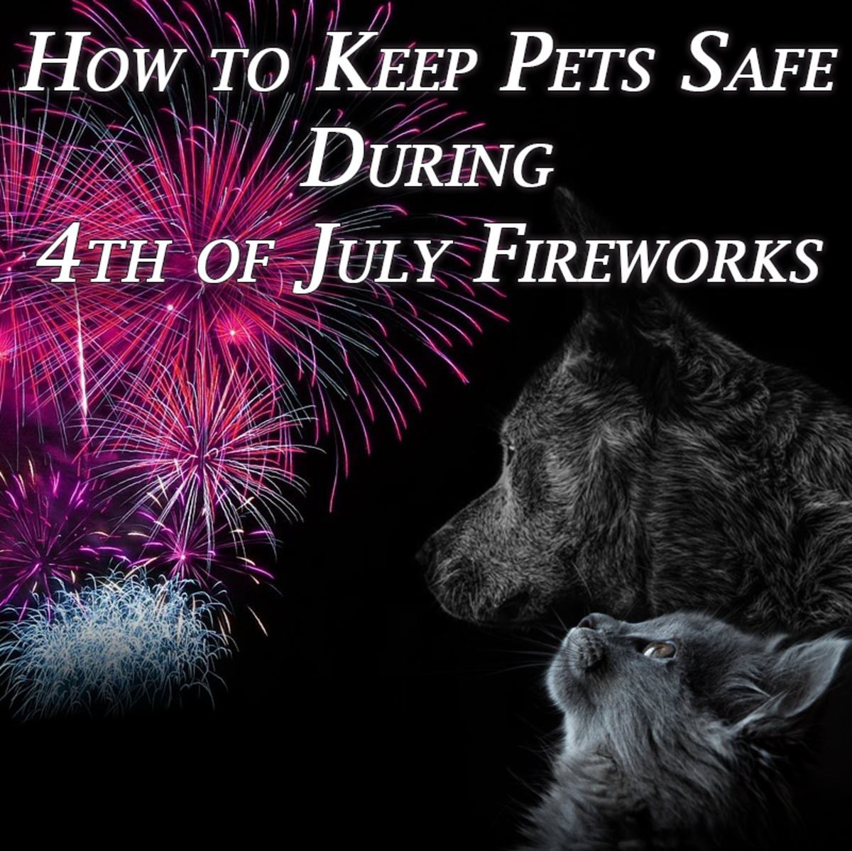 It is important to keep cats and dogs safe on the 4th of July.