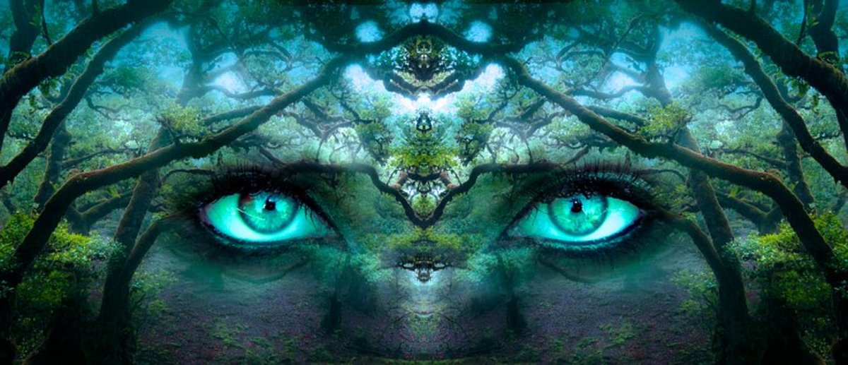 The Mysterious Forest of Lost Souls