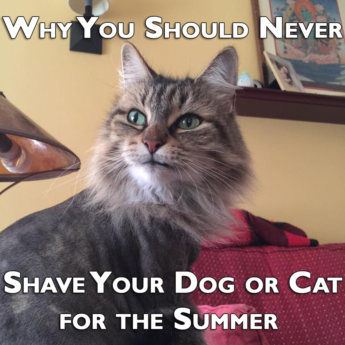 Why You Should Never Shave Your Dog Or Cat For The Summer
