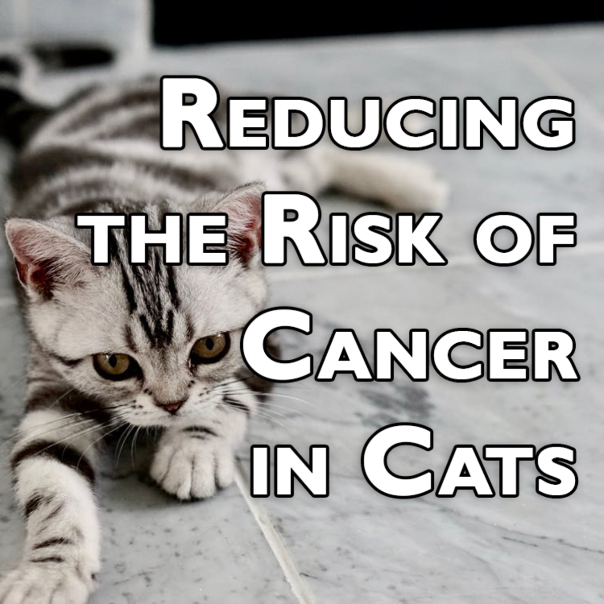 Tips for Reducing Your Cat's Cancer Risk