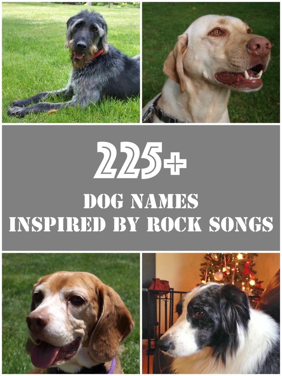 A list of more than 225 dog names inspired by all kinds of rock songs.