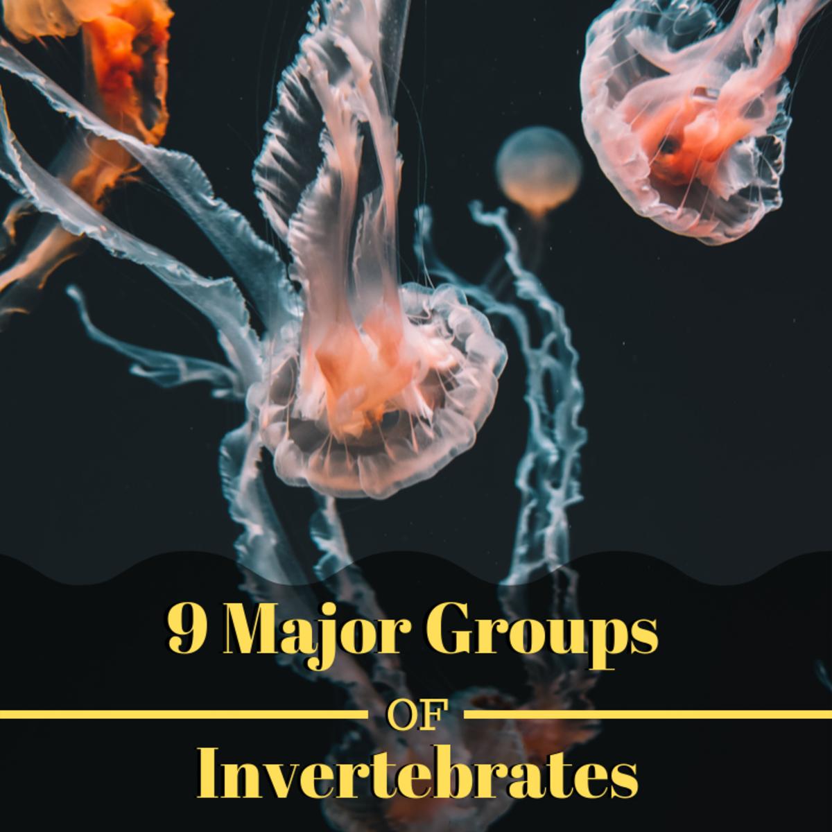9 Major Groups of Invertebrate Animals