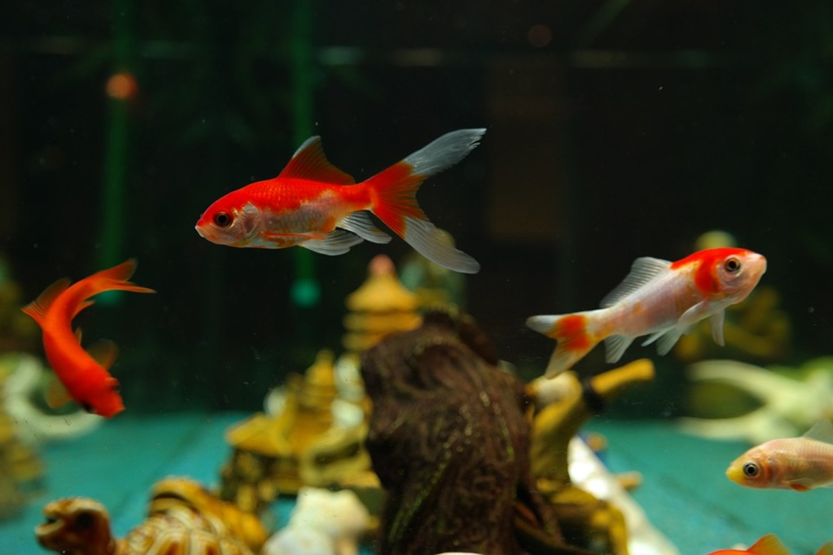 There are advantages to both aquariums with substrate and bare-bottom tanks. Learn more about why you might decide to forego the substrate.