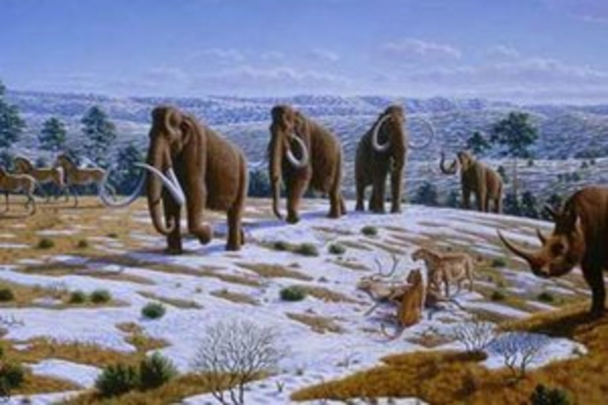 The Pleistocene epoch 11,700 years ago saw great land mammals and the expansion and evolution of Homo sapiens