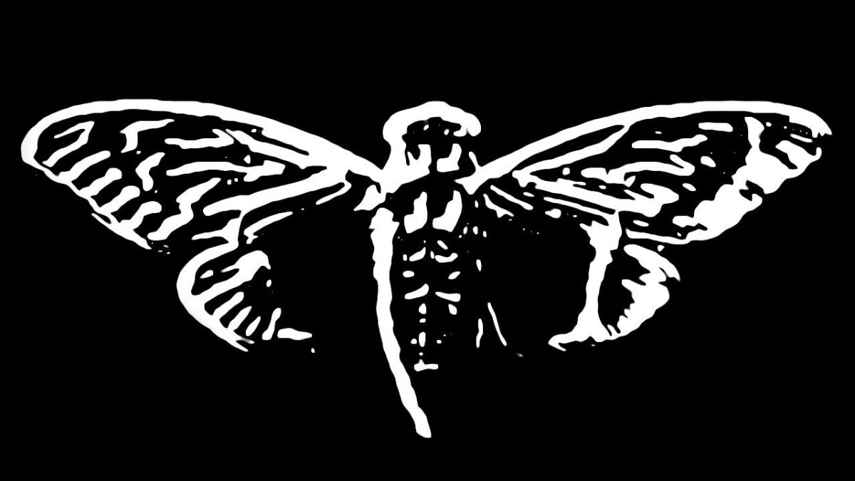 حشرة السيكادا