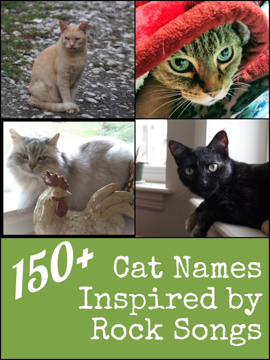 Over 150 cat names inspired by all types of rock music.