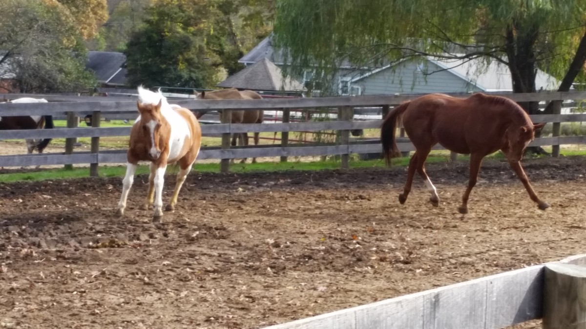 Using Horse Jokes to Spice Up Your Unmounted Horsemanship Lessons