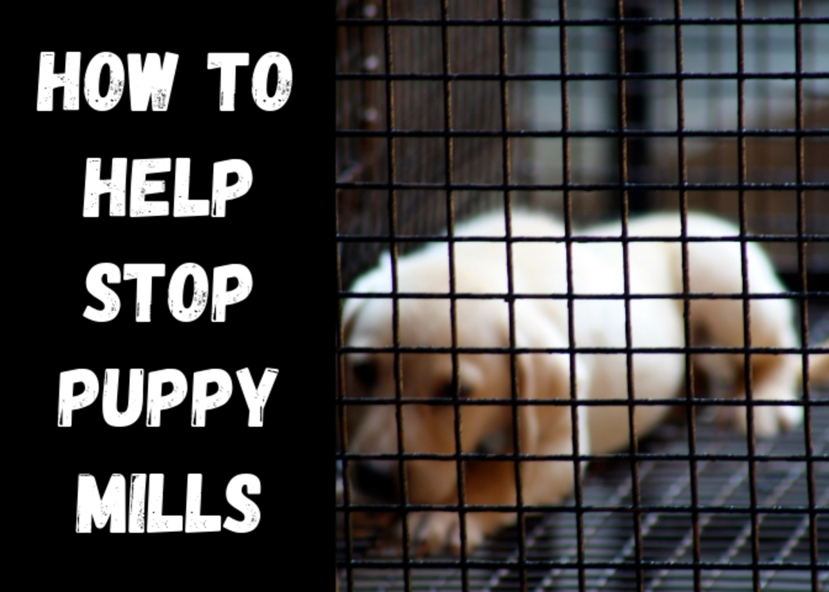 How to Join the Fight Against Puppy Mills