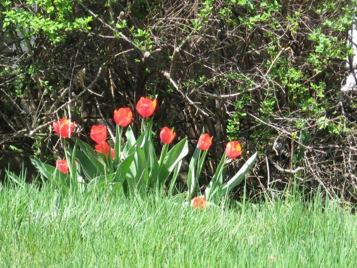 Bloom of Hope