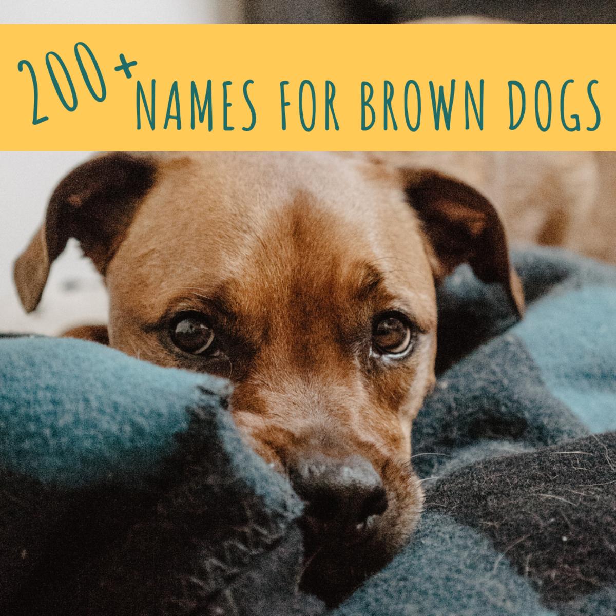 200+ Unique Brown Dog Names