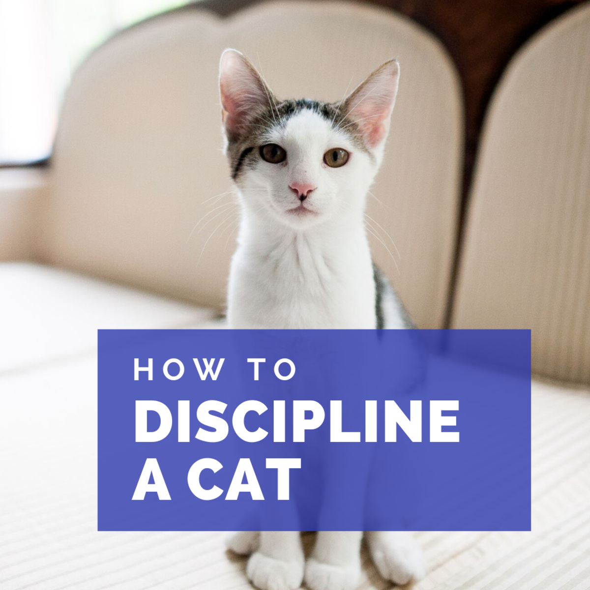 How to discipline a cat.