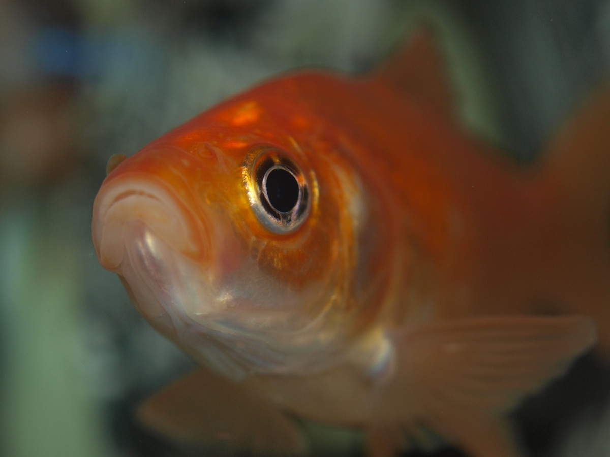 No, our attention span is not shorter than that of your average gold fish.