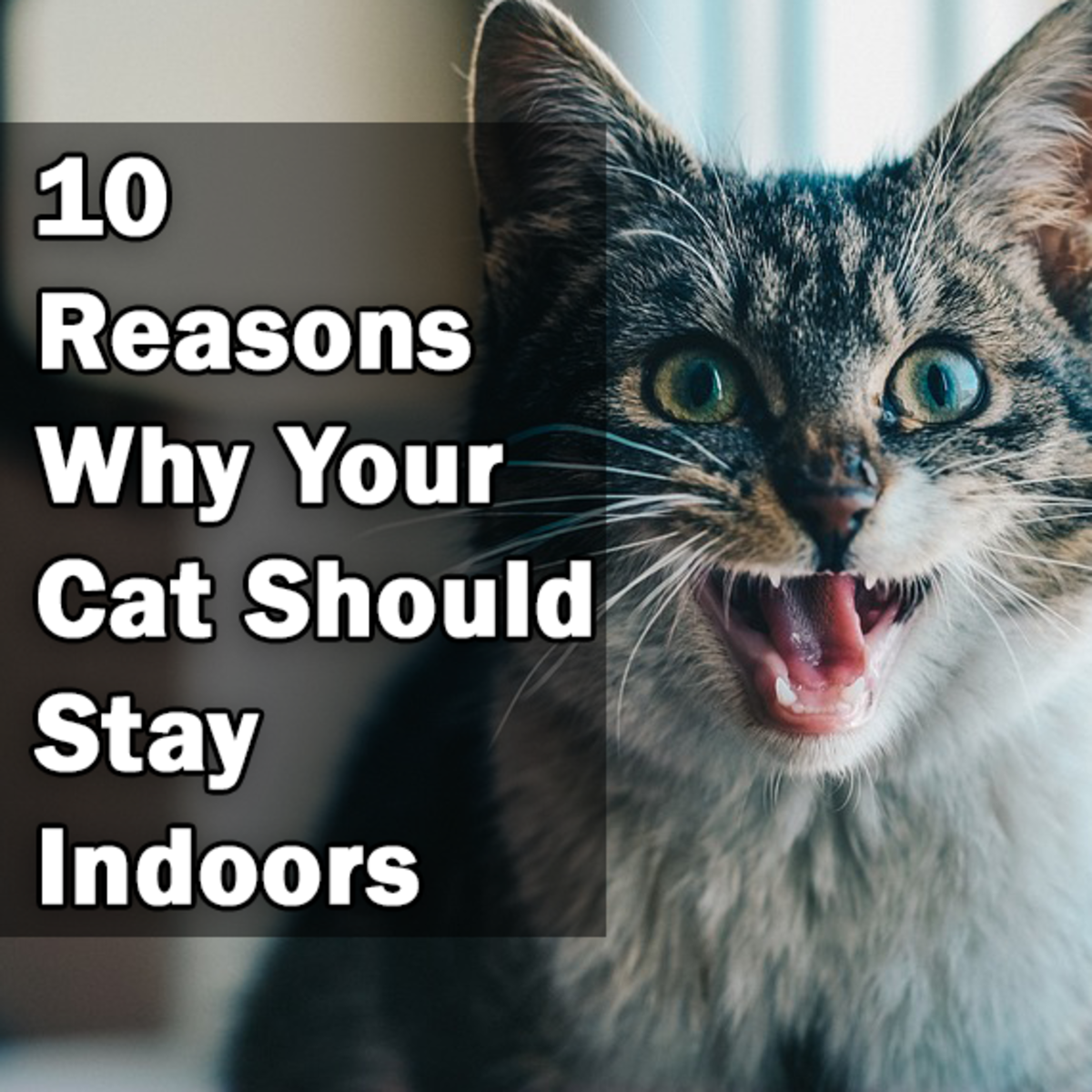 10 Reasons Why Your Cat Should Stay Indoors