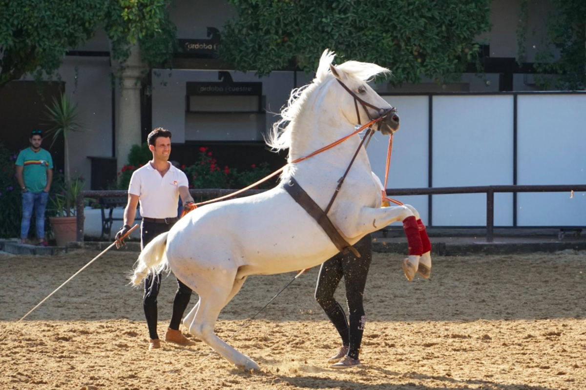 Visiting the Royal Stables and Andalusian Horses of Córdoba