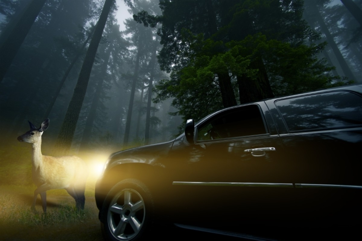 8 Tips for Avoiding Deer/Car Collisions!