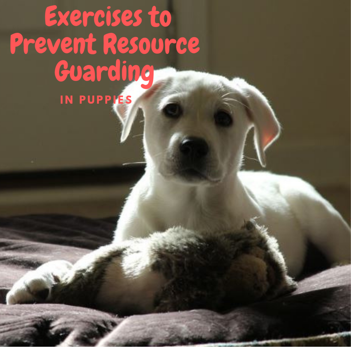Exercises for Preventing Resource Guarding in Puppies