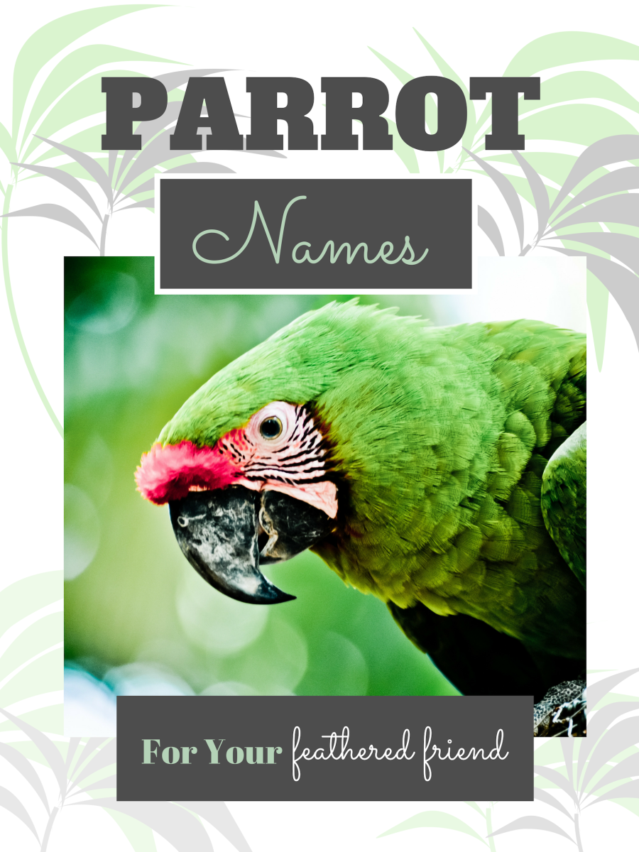 250+ Cool Parrot Names for Your Extraordinary Bird (From Ace