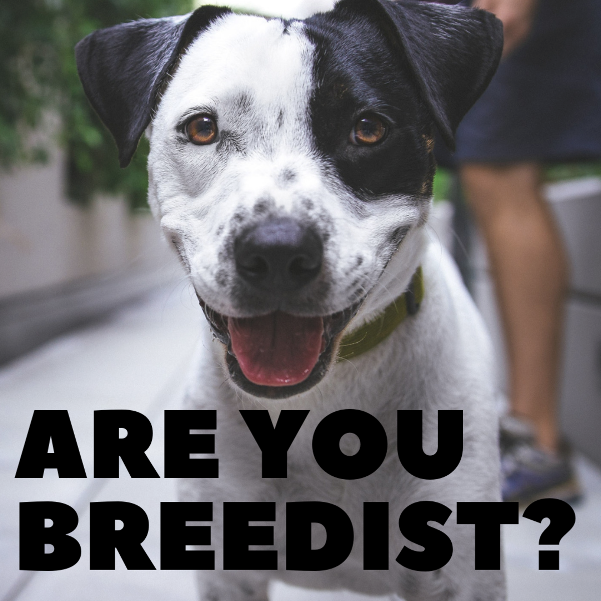 What Is Breedism and Why Do People Hate Pit Bulls?