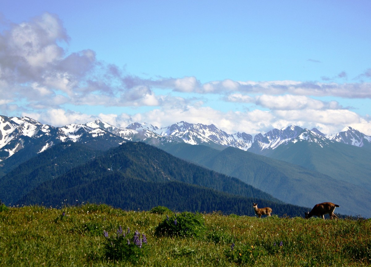 Hurricane Ridge at Olympic National Park near Seattle, Washington