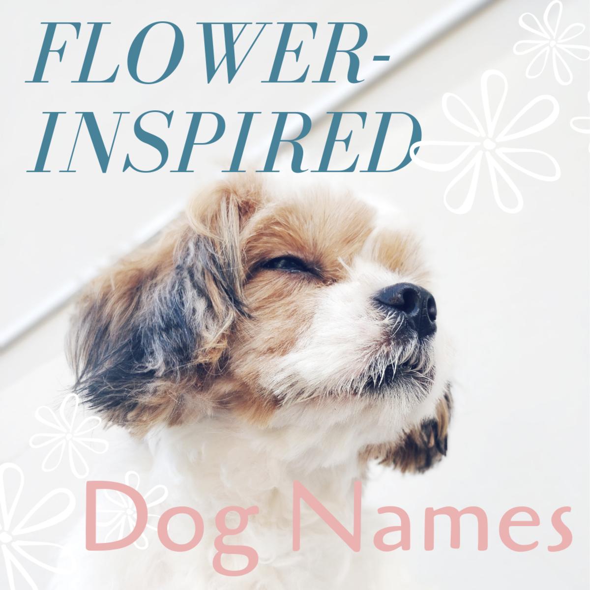 Flower-Inspired Dog Names