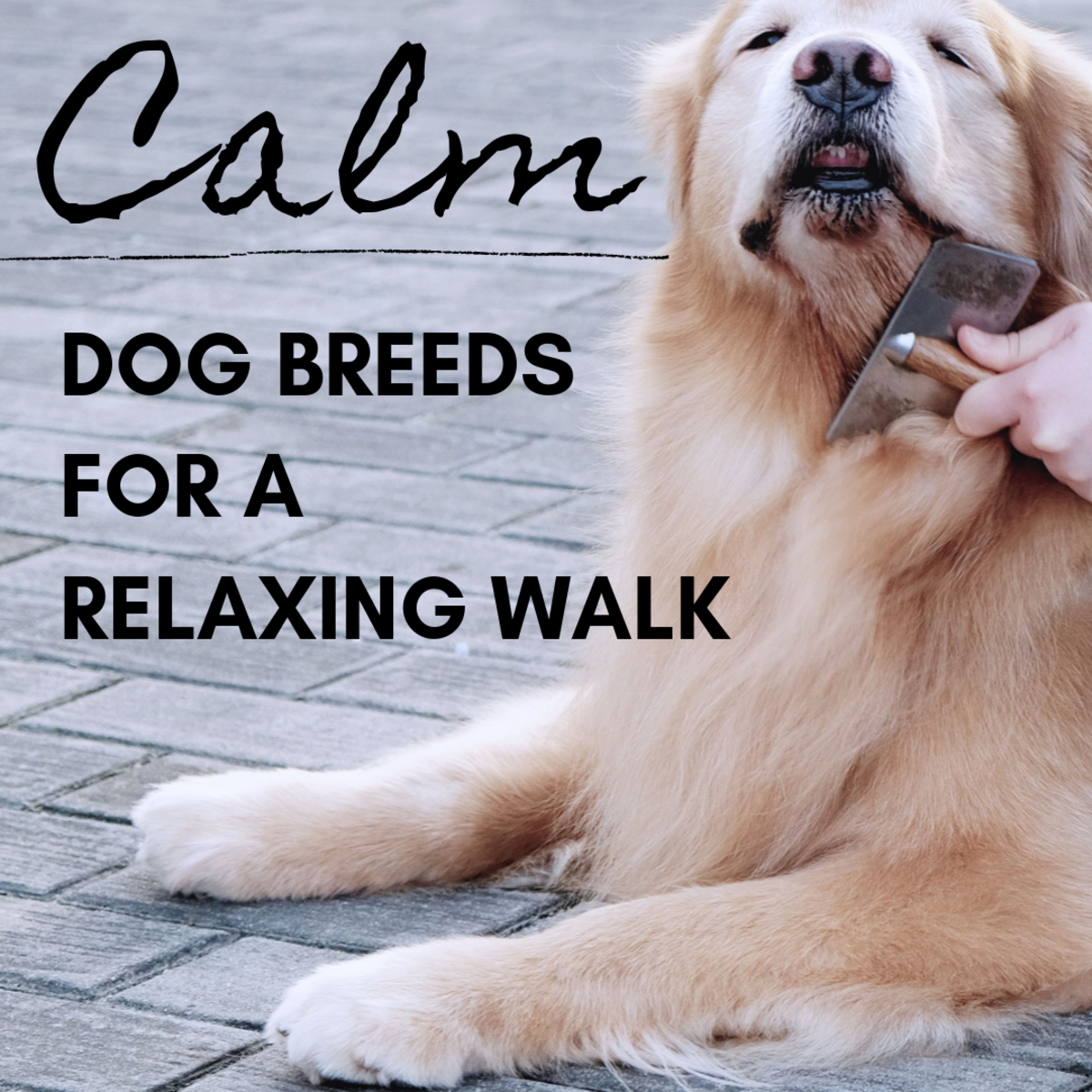Some dogs make relaxing companions on a walk.