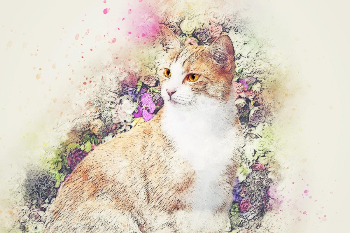 Cat Poems - Dr Seuss Style