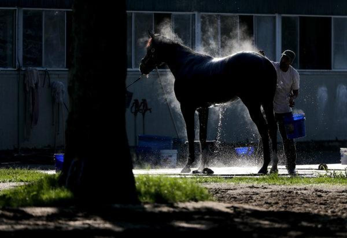 When the weather begins to warm, it is normal to want to give your horse a bath.
