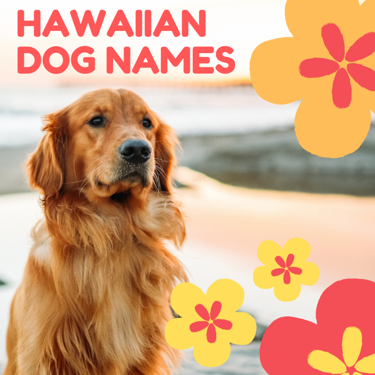 100+ Beautiful Hawaiian Dog Names