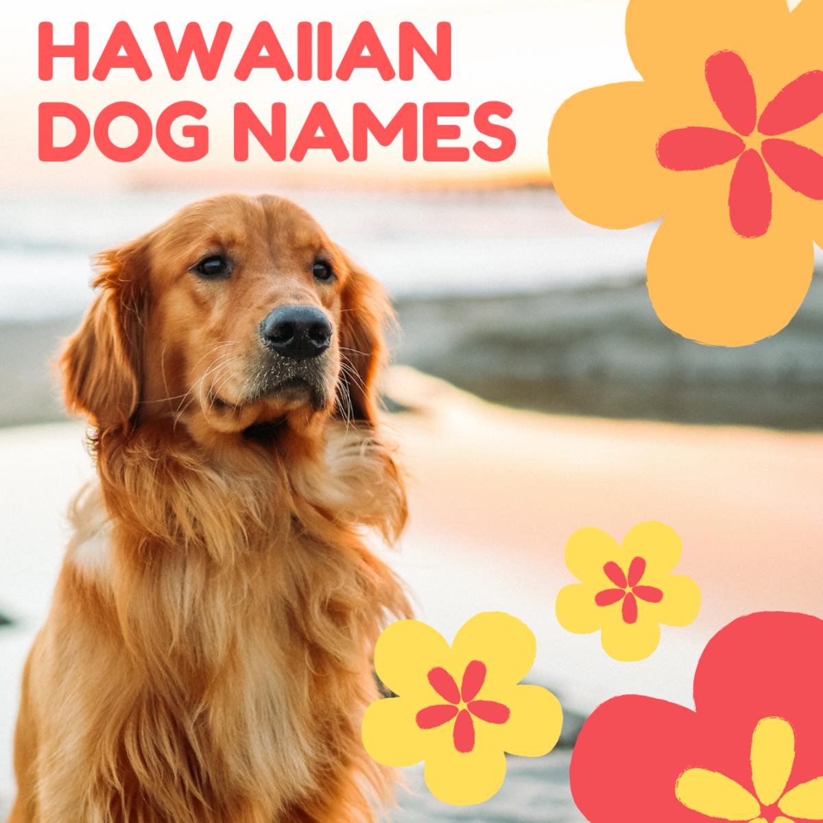 100+ Beautiful Hawaiian Dog Names