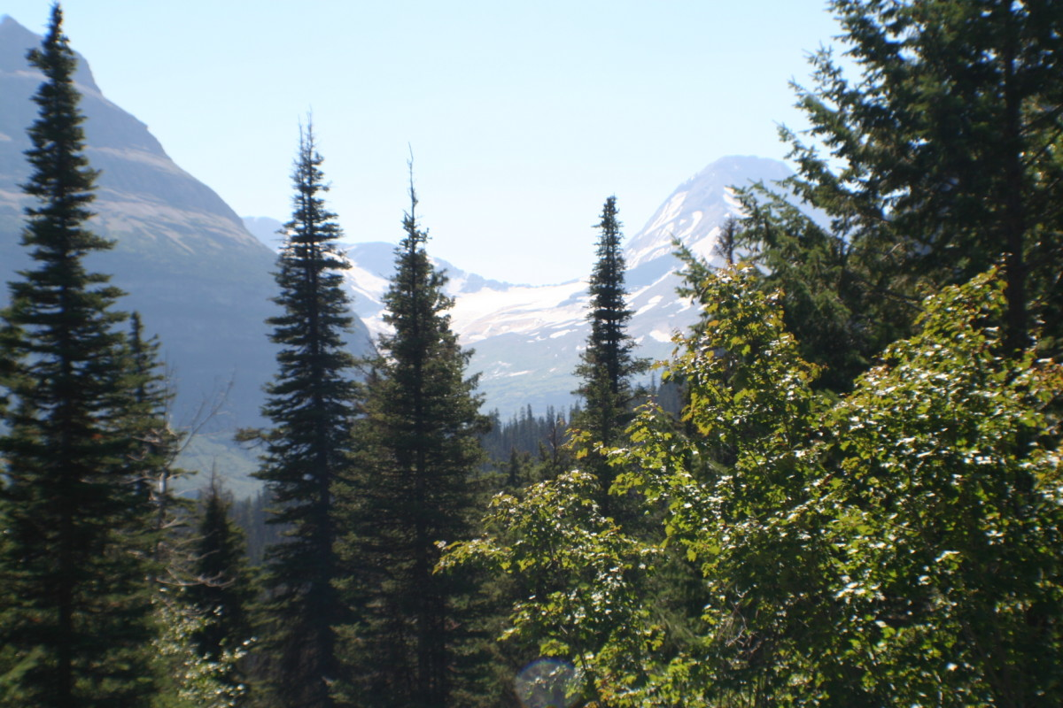 Glaciers through the pines.