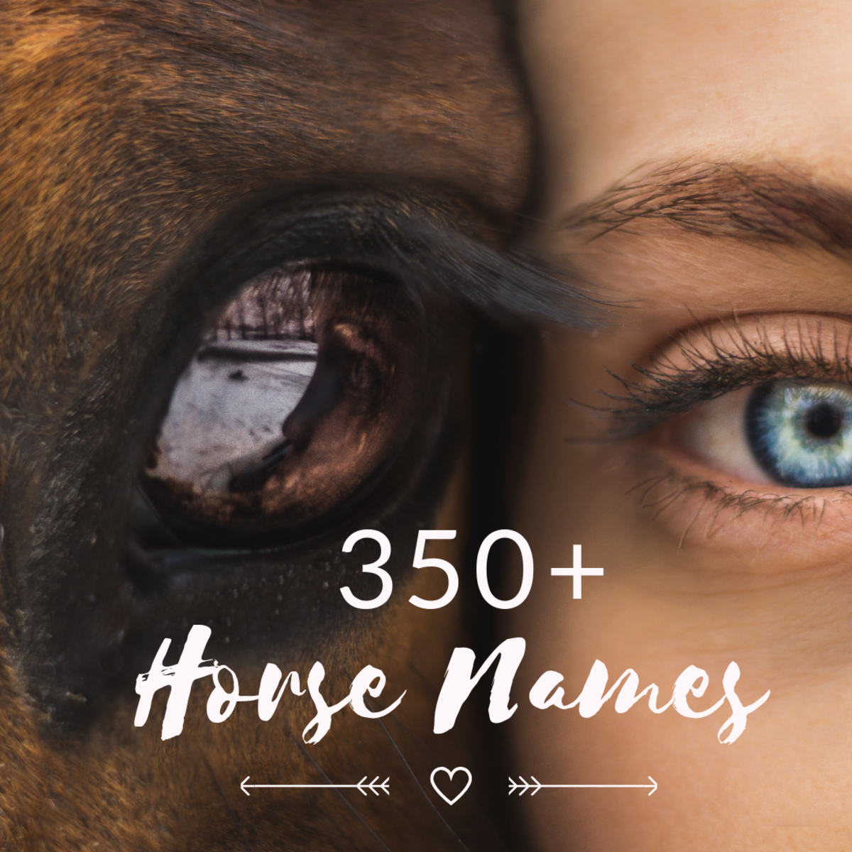 Horse name ideas for your beloved companion.