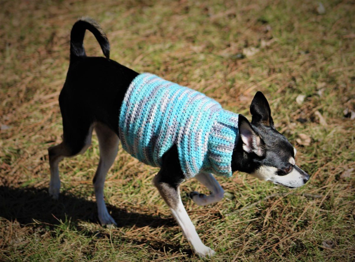 Half Double Crochet Small Dog Sweater