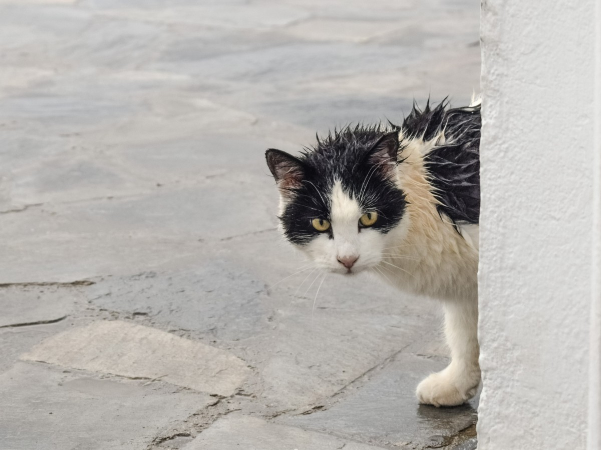 A Cat in the Rain - Poem for Cat Lovers