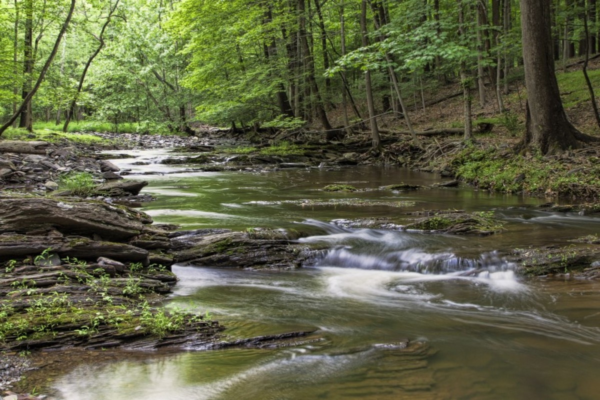 over-the-river-through-the-woods