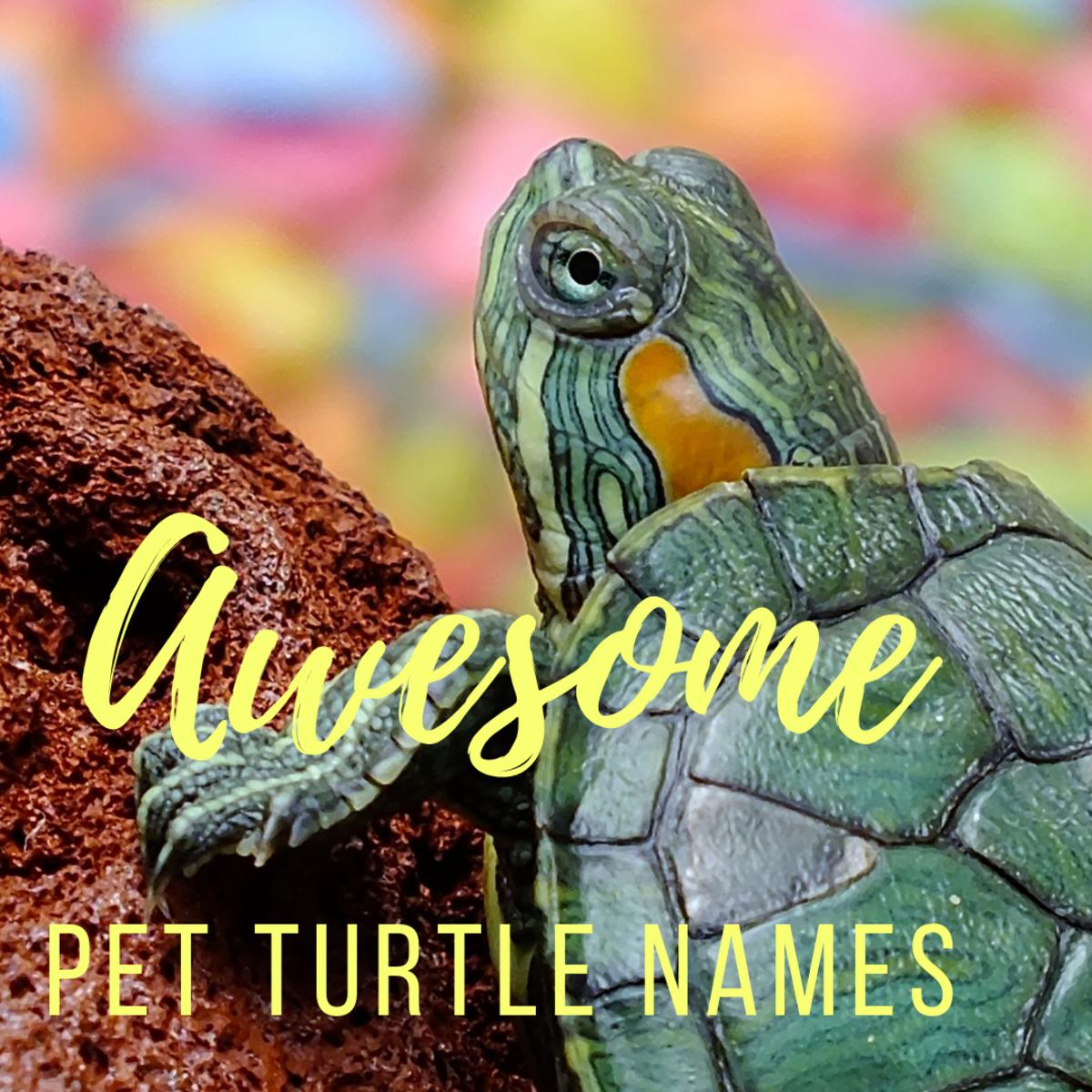 Popular Pet Turtle Names